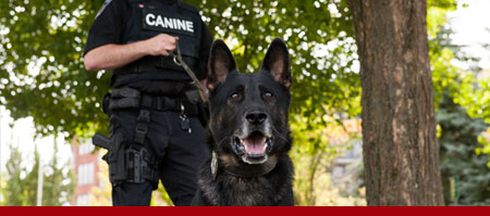 Global Security Services - K9 Unit